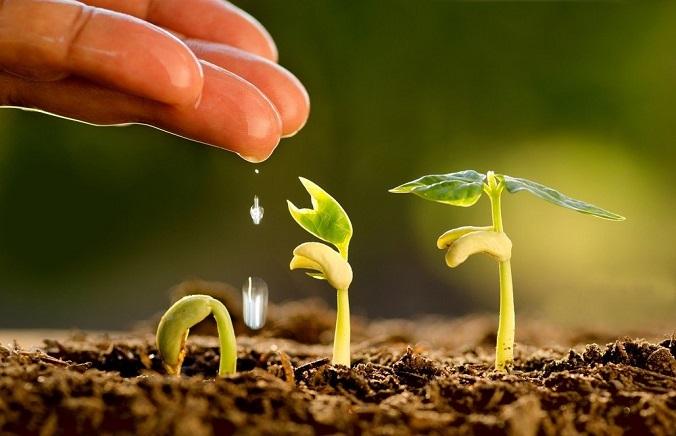 DIOXPURE obté la certificació ecològica